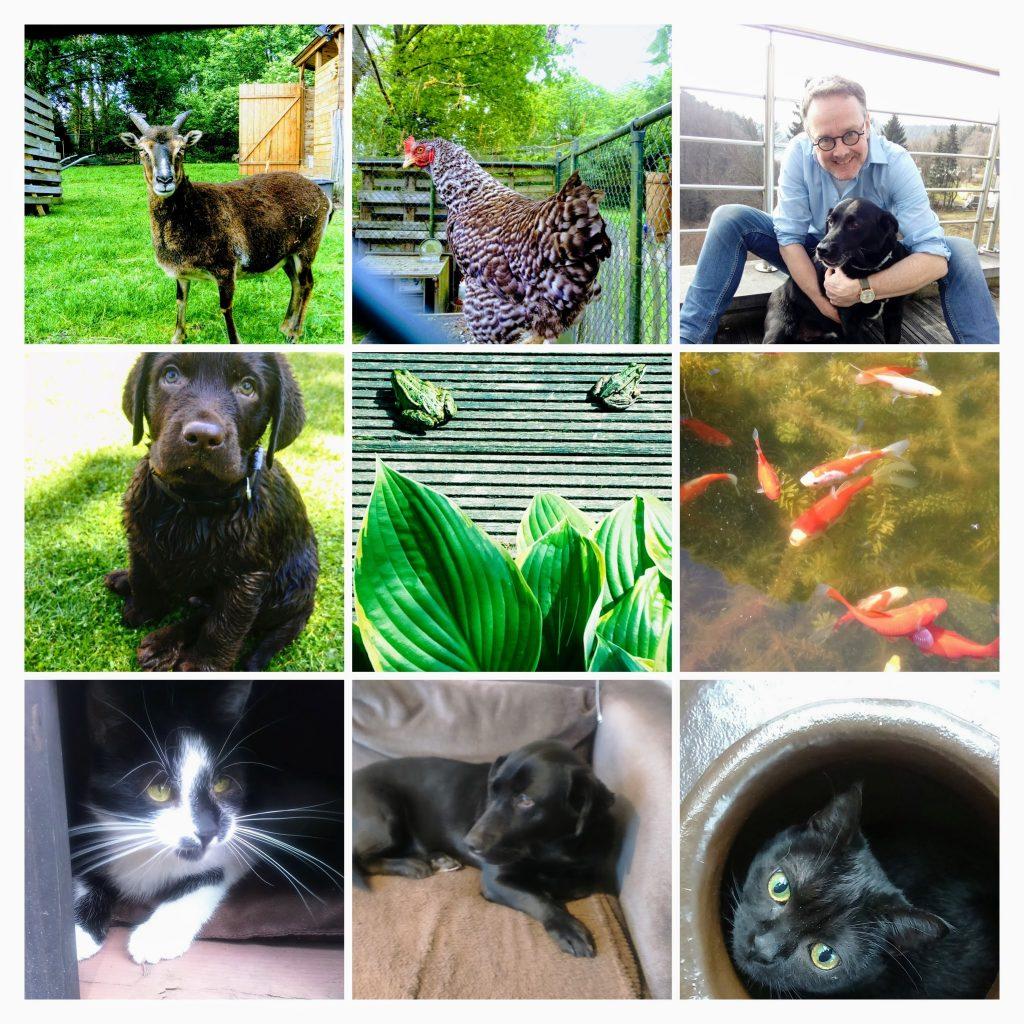 Onze beestenboel of huisdieren, vissen, kippen, soayschapen, hond, katten