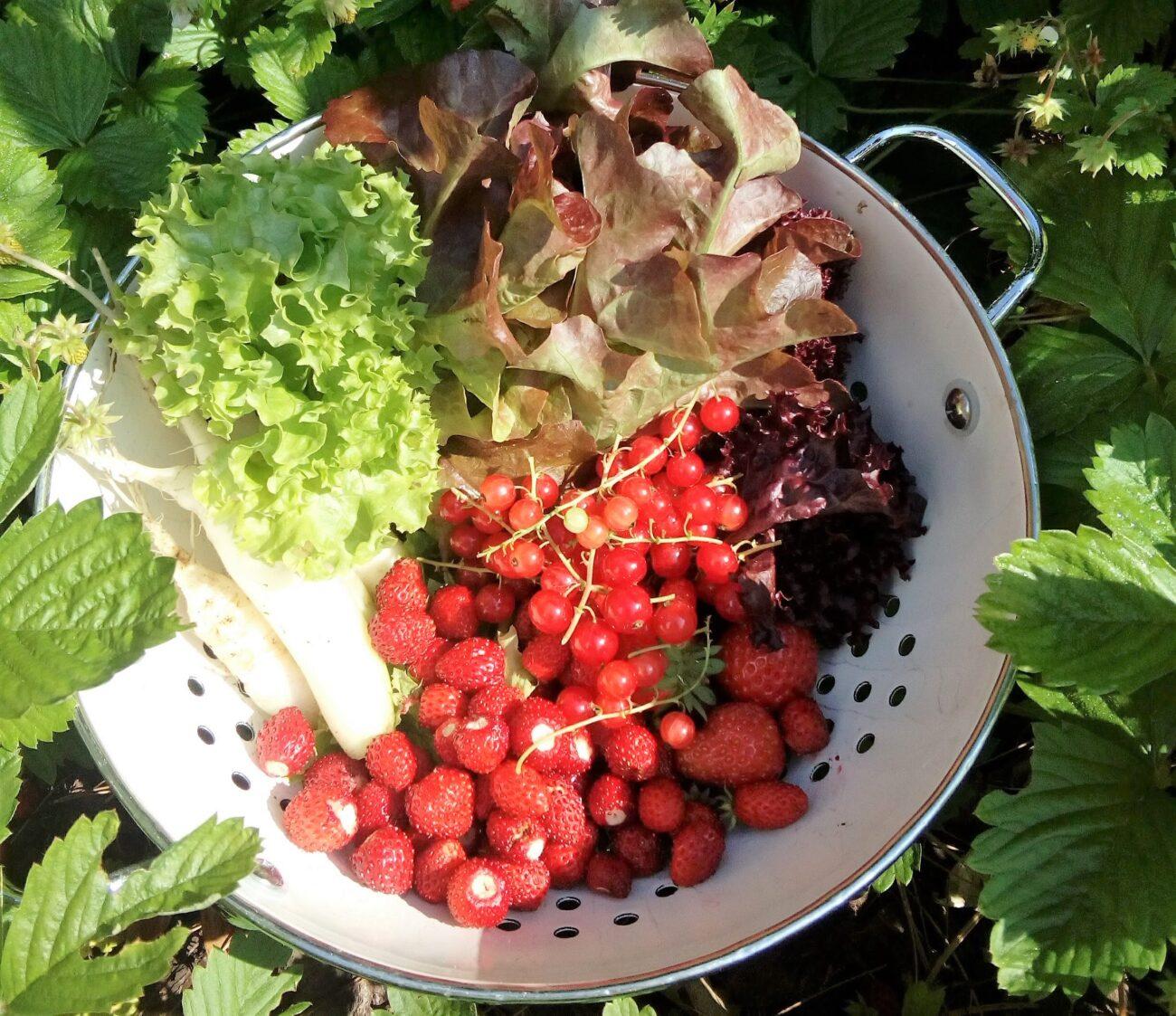 Dit is het lekkerste van juni, sla, bosaardbeien, groenten